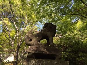 菊池神社狛犬