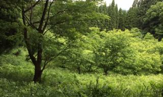 5月28日幣立神宮の森