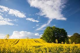 自然景色写真フリー