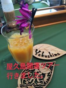 屋久島開運ツアー行きました。